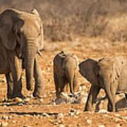 The Elephants Itching Rock Art Print by Paul W Sharpe Aka Wizard of Wonders