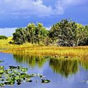 The Everglades Art Print