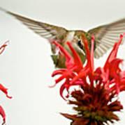 The Eye Of The Hummingbird Art Print
