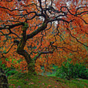 The Famous Tree At Portland Japanese Garden Art Print