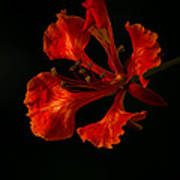 The Fire Flower Art Print