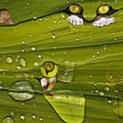 The First Rain Art Print