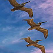 The Flight Of The Pelican Art Print