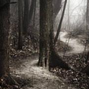 The Foggy Path Art Print by Scott Norris