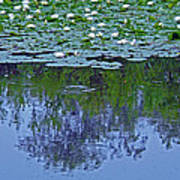The Forest Beneath The Lilypads Art Print
