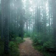 The Forest Of Secrets Art Print