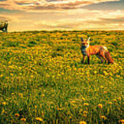 The Fox And The Cow Art Print