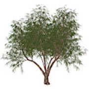 The French Tamarisk Tree Art Print