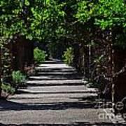 The Garden Pathway 2 Art Print