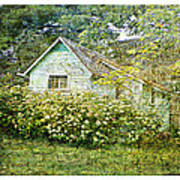 The Garden Shed Art Print by Dianne  Lacourciere