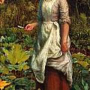 The Gardeners Daughter Art Print