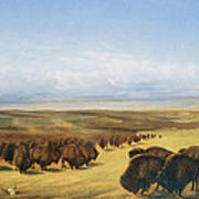 The Gathering Of The Herd Art Print by William Jacob Hays