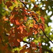 The Glory Of Autumn Art Print
