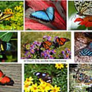 The Glory Of Butterflies 3 Art Print