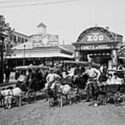 The Goat Carriages Coney Island 1900 Art Print