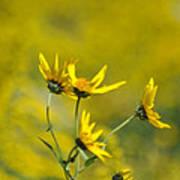 The Golden Wildflowers Art Print