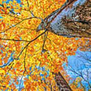 The Gorgeous Fall Art Print