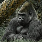 The Gorilla 3 Art Print