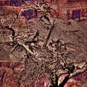 The Grand Canyon Viii Art Print