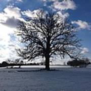 The Grand Tree Season Winter Art Print