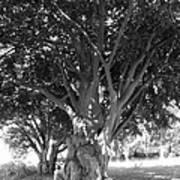 The Grandmother Tree Art Print