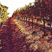The Grapes Of The Wine Country Art Print