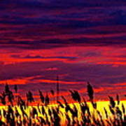 The Grasses Reach  Art Print by Q's House of Art ArtandFinePhotography