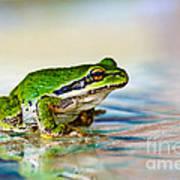 The Green Frog Art Print by Robert Bales