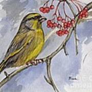 The Greenfinch Art Print