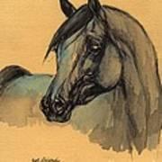 The Grey Arabian Horse 1 Art Print