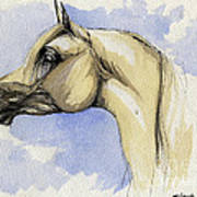 The Grey Arabian Horse 12 Art Print