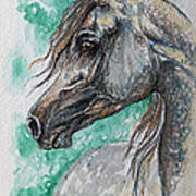 The Grey Arabian Horse 13 Art Print