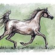 The Grey Arabian Horse 8 Art Print