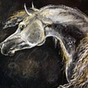The Grey Arabian Horse 9 Art Print