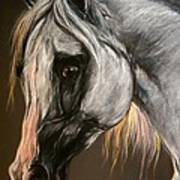 The Grey Arabian Horse Art Print