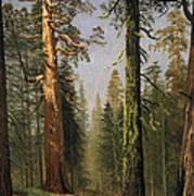 The Grizzly Giant Sequoia Mariposa Grove California Art Print