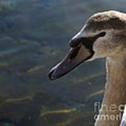 The Haughty Goose  Art Print