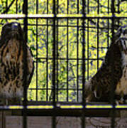 The Hawks From The Series The Imprint Of Man In Nature Art Print