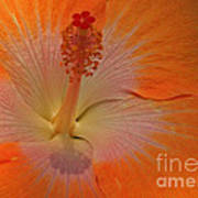 The Heart Of A Hibiscus Art Print