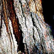 The Heart Of Barkness In Mariposa Grove In Yosemite National Park-california  Art Print