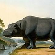 The Hippopotamus, 1804 Art Print
