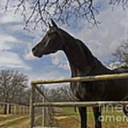 The Horse Trainer Art Print