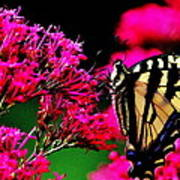 The Hungry Butterfly Art Print