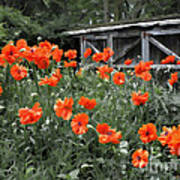 The Inspiration Of Orange Poppies Art Print
