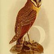 The Java Owl Cassell Art Print
