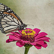 The Joy Of A Butterfly Art Print
