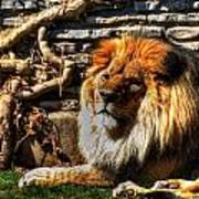 The King Lazy Boy At The Buffalo Zoo Art Print
