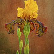 The Kings Prize Iris Art Print