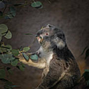 The Koala Art Print