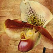 The Lady Slipper Orchid Art Print